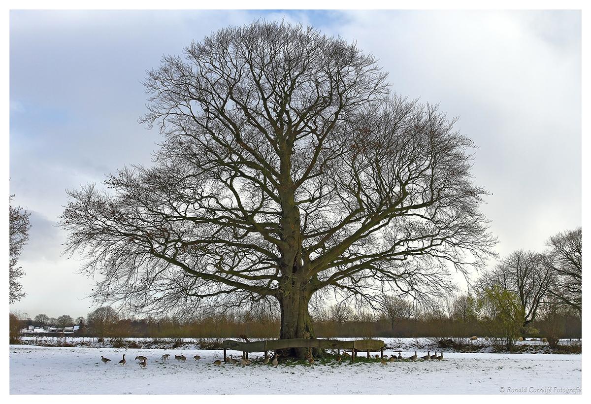 Boom in winterlandschap